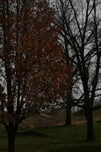 Last tree that still has leaves
